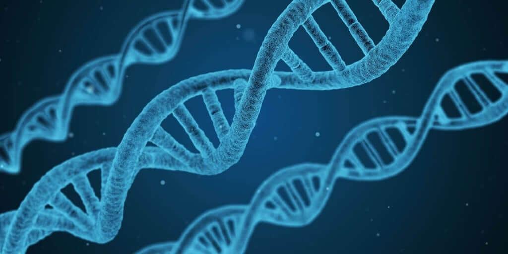 Centrosoma e centrioli ruoli nel processo mitotico