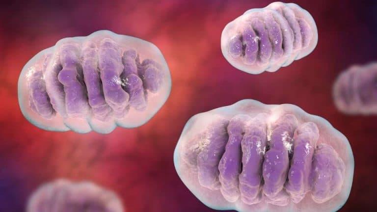 Mitocondri 10 funzioni da sapere per il Test